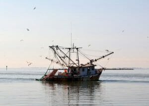 commercial fish farming is bad for the environment
