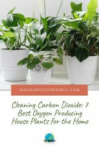 Cleaning Carbon Dioxide 7 Best Oxygen Producing House Plants for the Home